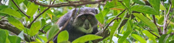Abenteuer Tansania - Tierwelt