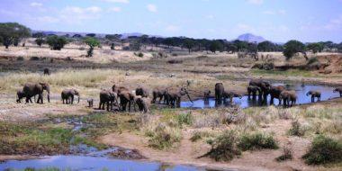 Tarangire Nationalpark, Elefanten