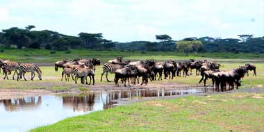Serengeti Savannah Camps – Umgebung