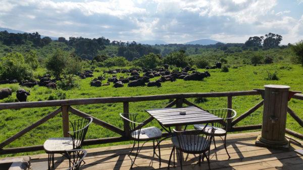 Rhino Lodge, Terrasse mit Aussicht