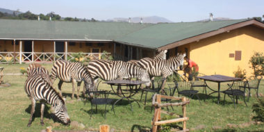 Rhino Lodge, Zebra-Invasion