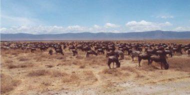 Speke Bay Lodge, Büffel und Zebras