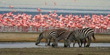 Lake Manyara Nationalpark, Beitragsbild