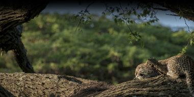 Kusini Safari Camp, Gepard