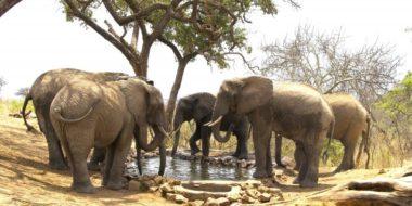 Tarangire Treetops, Elefanten am Wasserloch