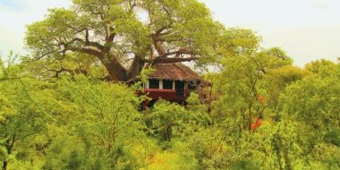 Tarangire Treetops, Baumhaus