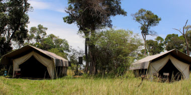 Serengeti Savannah Camps, Wohnzelte
